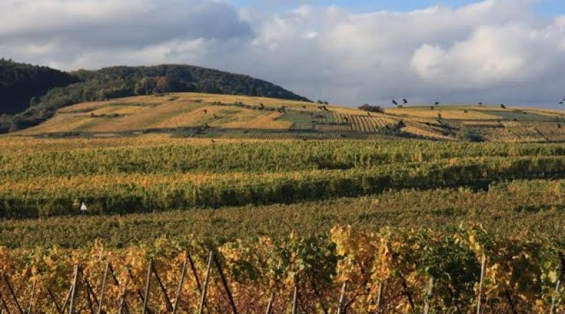 La campagne d'Alsace